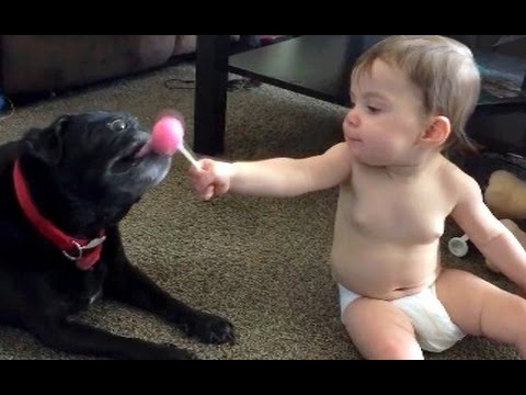 Cats and dogs sneezing, playing with kids and much more - Watch and laugh!