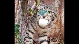 Смешные Видео Приколы с Котами Смешные Коты до Слез Смешные Животные 2019