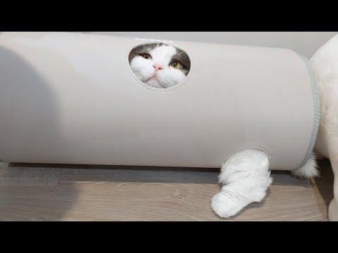 캣터널 들어갔다 몸이 너무 커서 합체된 고양이 🐖