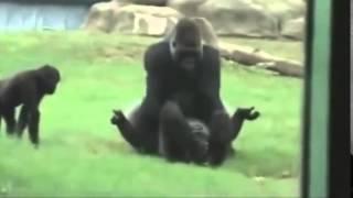 Смешное видео 2014   Спаривание животных сумасшедшее видео Part1