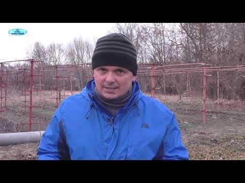 Вопрос: Каким агротексом укрыть клубнику на зиму белым или черным?