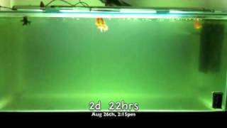 Aquarium UV Sterilizer/Filter in Action!