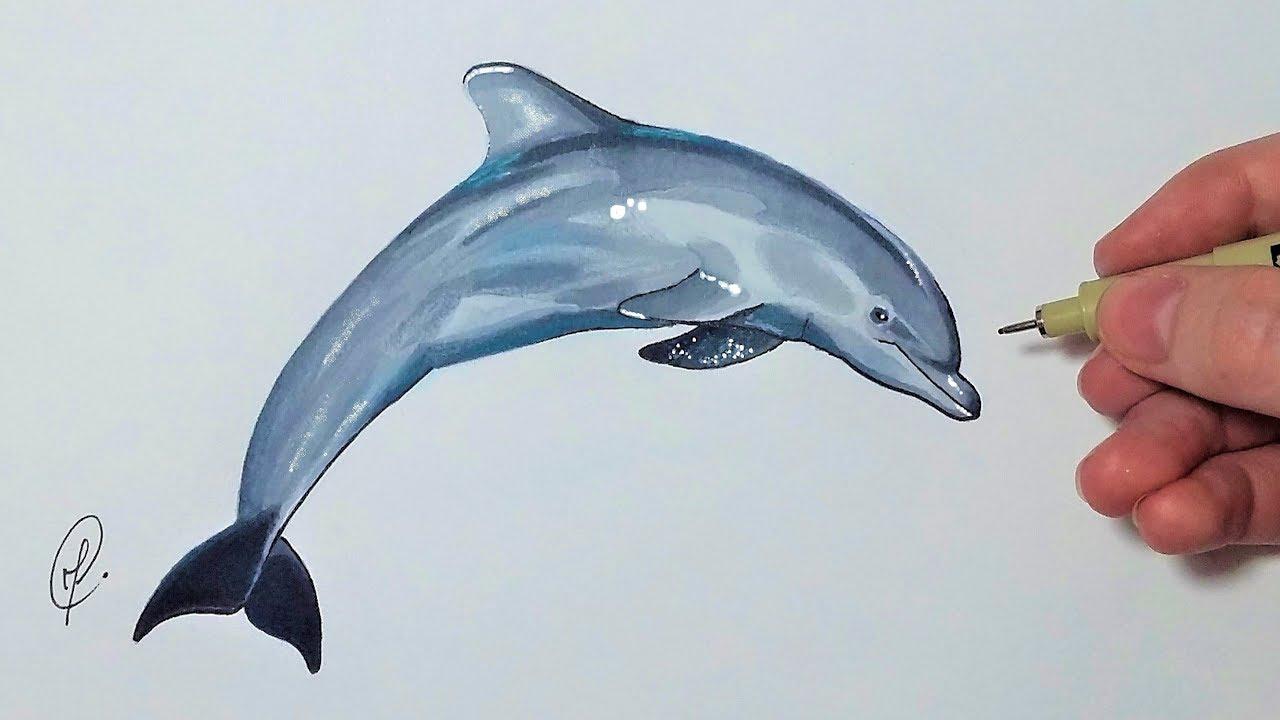Dessiner un dauphin tutoriel facile youtube - Dauphin dessin couleur ...