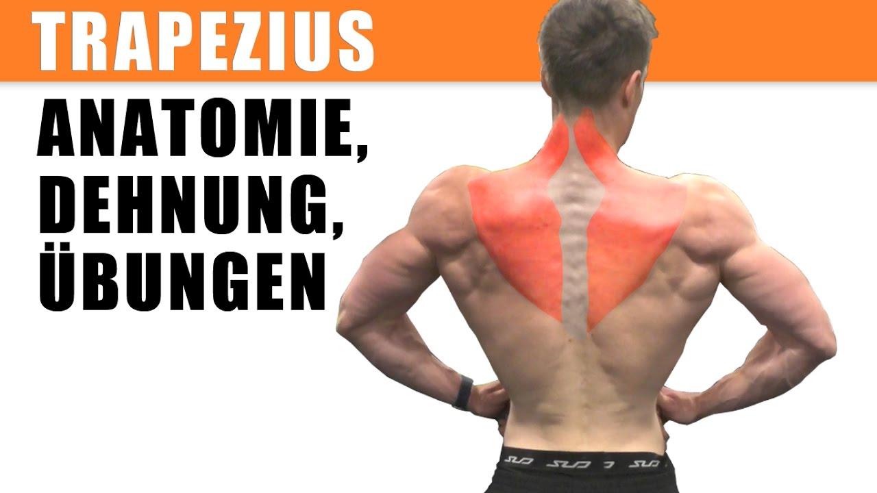 m. trapezius: Training, dehnen, Anatomie, Übungen - YouTube