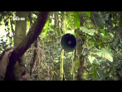 Дикие племена Амазонки видео. Дикие племена Америки