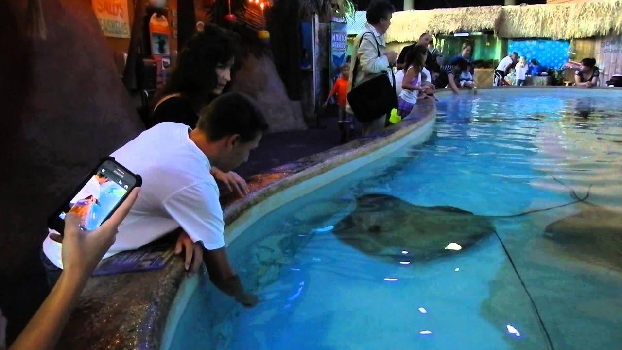 Feeding Stingrays At Denver Downtown Aquarium Youtube