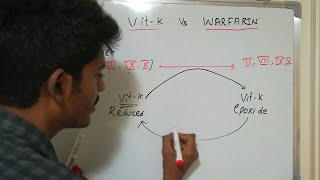 Vit K vs WARFARIN