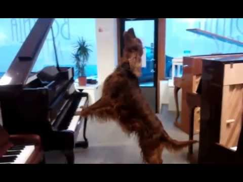 Can We Get This Dog A Grammy?