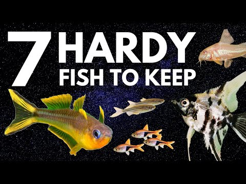 Top 7 Hardy Fish For Your Freshwater Aquarium