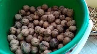 Орехи на хранение. Особенности