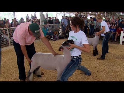 4-H Sheep Show - YouTube