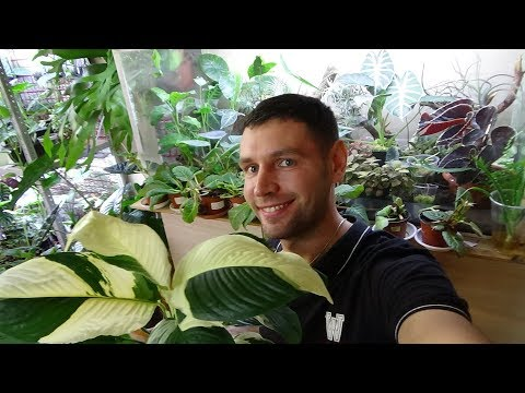 Мега обзор растений.