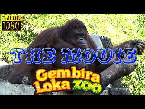 Binatang Langka Wisata Gembira Loka Zoo Yogyakarta Indonesia [ Full HD ]