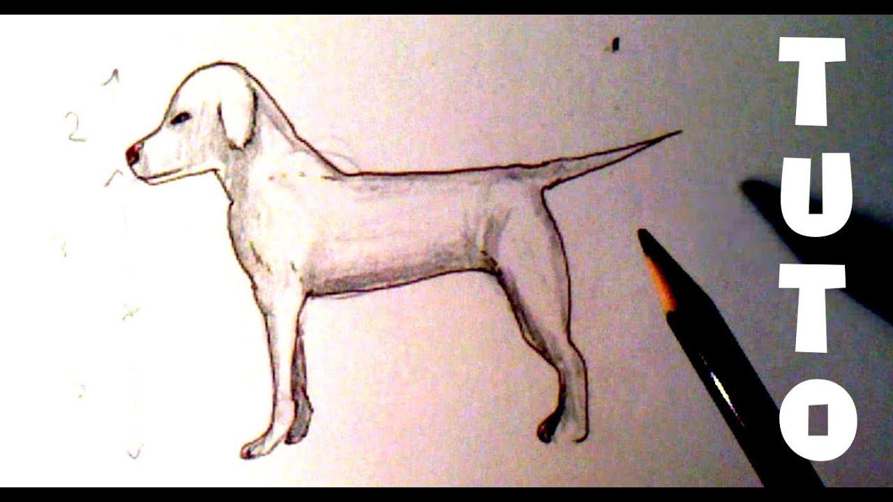 Häufig Comment dessiner un chien - Tutoriel [Niveau 1] - YouTube HC33