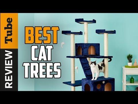 ✅Cat Tree: Best Cat Tree 2019 (Buying Guide)