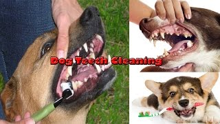 Dog Teeth Cleaning / How to Cleaning Dog Teeth at Home - Stay Healthy - Number Source of Health