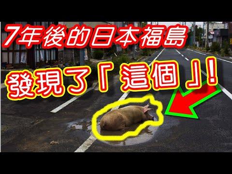 【被遺棄的日本福島】7年後輻災,竟然「還有生命苟延慘喘」。|亞洲幫Asian People 〈HD觀看〉
