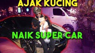 Ajak Kucing Naik Super Car!