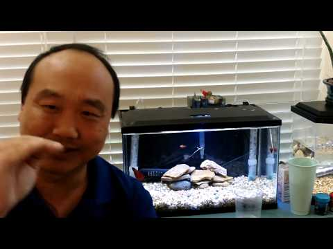 How To Raise PH In Your Fish Tank