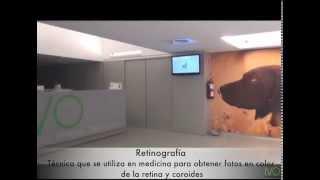 Retinografía, angiografía fluoresceína, en oftalmología veterinaria