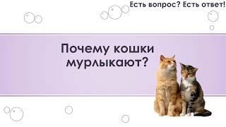 Почему кошки мурлыкают? [13]