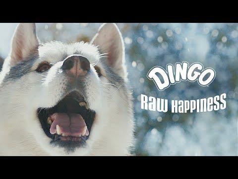 dingo®- -raw-happiness- -snow