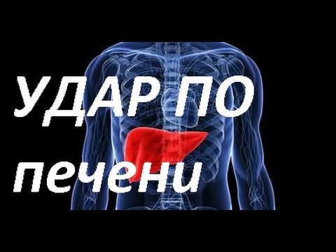 Селезенка – болезни селезенки, диагностика, профилактика
