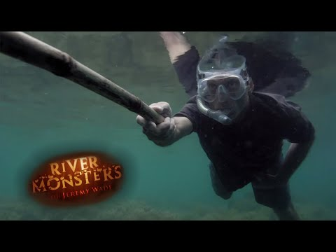 On The Trail Of A Coral Killer - River...