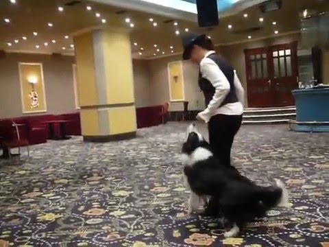 Dancing dog on Turkey's Got Talent (live audition)