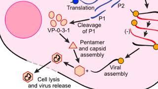 paraziták és férgek elleni gyógyszer örökre megszabadulni a parazitáktól