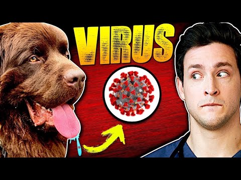 How Dogs Spread The Coronavirus