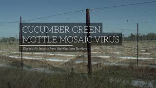 Cucumber Green Mottle Mosaic Virus: Biosecurity lessons from the Northern Territory, Australia