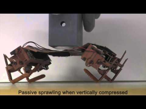 Este robot se inspira en las cucarachas para poder funcionar incluso aplastado