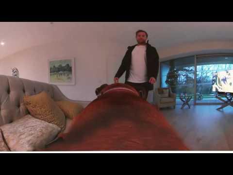 It's a Dog's Life – starring Jamie Heaslip & JayZ
