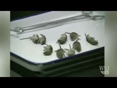 Rats on a Plane! Raw Video From Xiamen Airport