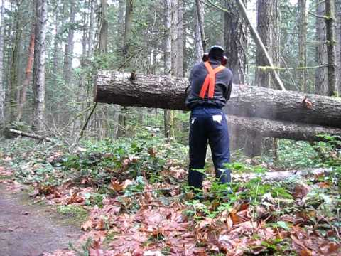 Chainsaw work in the Forest / Salt Spring Island, Canada