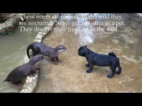 Corey Klug - Puppy Otter Playdate