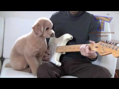 Cute Animals Playing Instrument - Funny Compilation