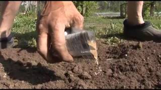 видео Как избавиться от муравьев на даче