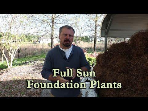 Garden Center Tour of Shrubs for Full Sun Foundation Plantings
