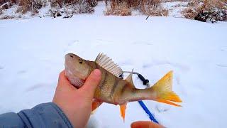 Решили побывать на МИКРО РЕЧКЕ зимой Ловля на безмотылку плотвы и окуня Рыбалка в любимых местах