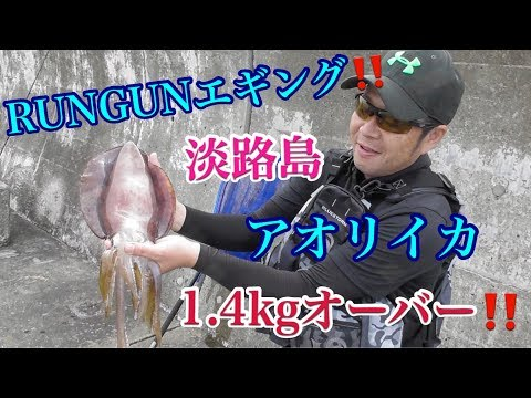 イカ 釣り 時期