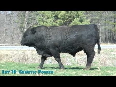 Lot 16  Genetic Power