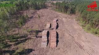 Вырубка леса возле д.Раздоры.Московская область