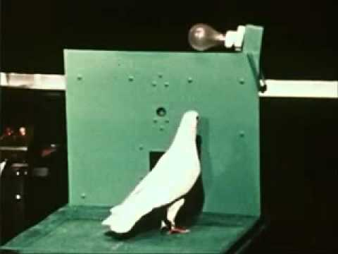 Skinner   Shaping Pigeon Turn Clip