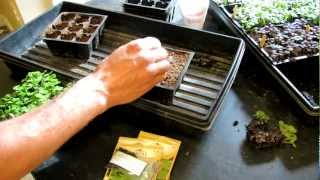 TRG 2012: How to Start 7 Kinds of Basil in Seed Cells