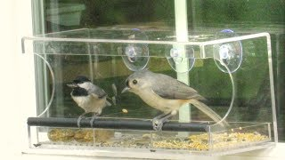 Tufted Titmouse and Chickadee Sunflower Seed Cracking Technique -   Clear Window Bird Feeder