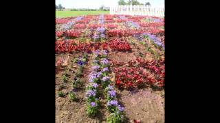 """The Creation Of The """"weaver Fever"""" Quilt Garden At Weaver Furniture Sales"""