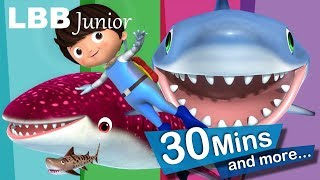 Shark Song | And Lots More Original Songs | From LBB Junior!