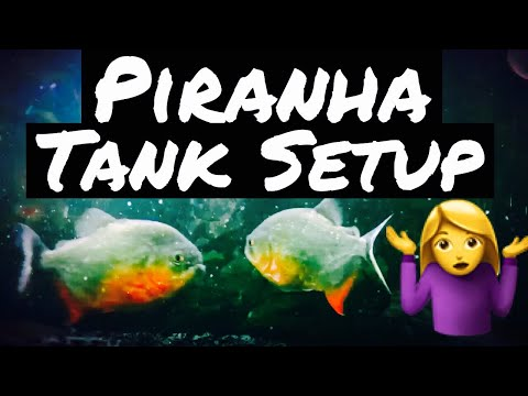 Piranha Aquarium Setup & Tank Care - Beginner?